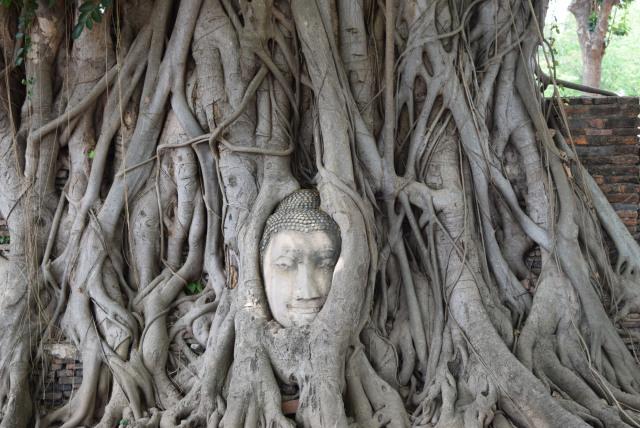 Photos of Temple Run at Ayutthaya, Thailand 1/1 by Nikita Anand