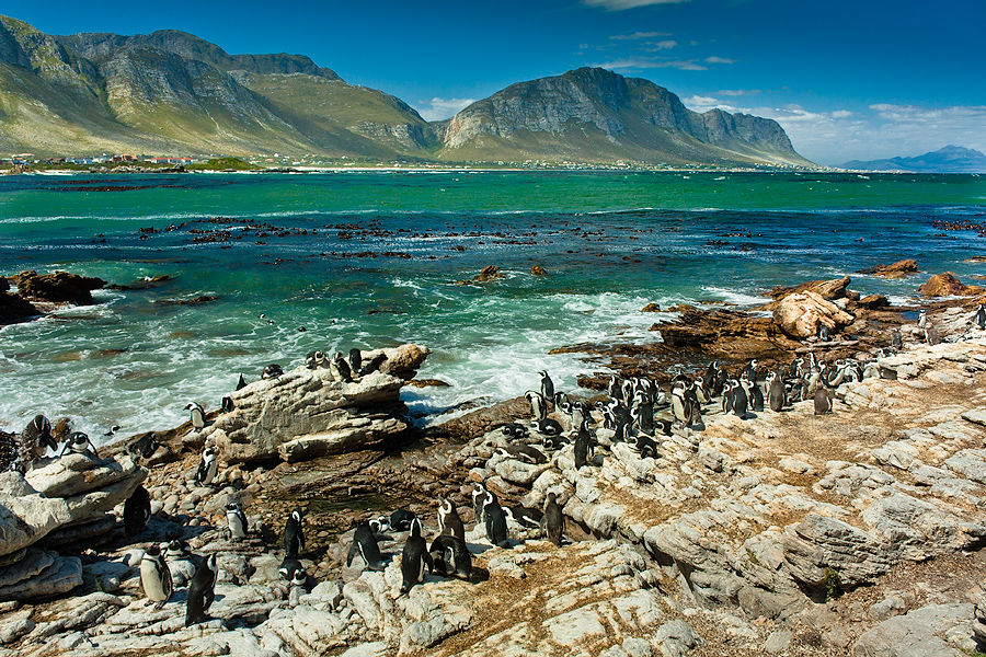 Photos of Jackass Penguin Colony 1/8 by Shaun