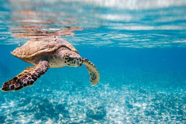 Photos of Turtle underwater 1/13 by Rebecca