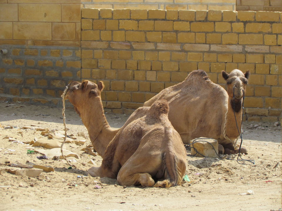 Photos of Jaisalmer, Rajasthan, India 2/8 by Prahlad Raj