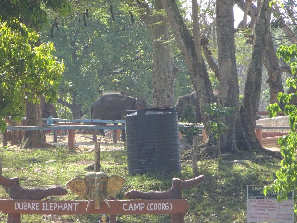Photos of Dubare Elephant Camp, Nanjarayapatna, Karnataka, India 2/3 by Prahlad Raj