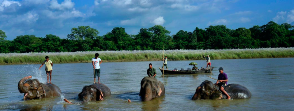 Here's Why Chitwan National Park Is The Best To See Wildlife In Asia