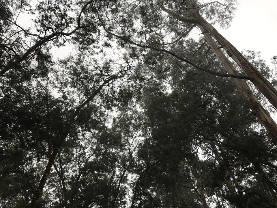 Photos of Through The Mists!! 1/1 by Akshay Kannan