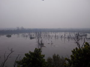 Dudhwa National Park 1/34 by Tripoto