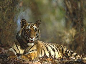 Bandhavgarh National Park 1/10 by Tripoto