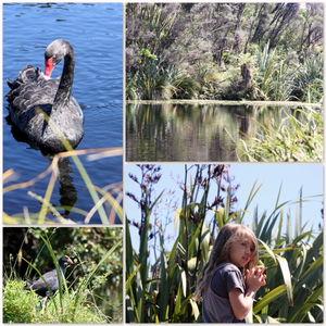 Nga Manu Nature Reserve 1/2 by Tripoto