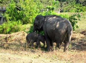 Kaziranga National Park 1/119 by Tripoto