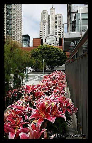 San Francisco Museum of Modern Art 1/1 by Tripoto
