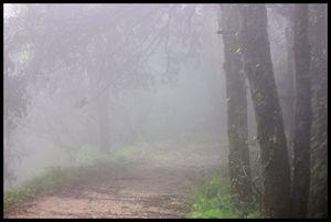Amidst the Wilderness of Binsar Wildlife Sanctuary