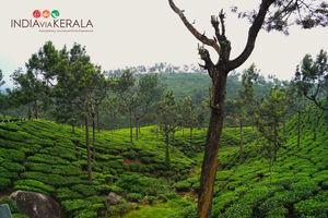 Live it 'up' in Munnar