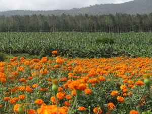 Wayanad: Nature's Paradise