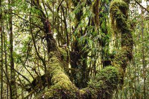 The trek to the highest peak of the Neora Valley National Park - Rachela Pass