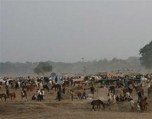 Incredible Madhya Pradesh - Chambal Safari