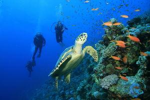 Mexico: A Coastal Sojourn