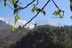 A lovely homestay at Khaneara Village - Dharamsala