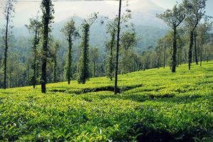 4 Wanderers and their wonderful Wayanad tale.