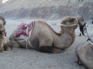Things to do in Nubra Valley – A Complete Travel Guide