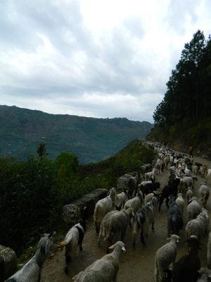 Trek to Parashar Lake, Mandi, Himachal Pradesh