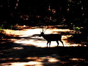 """""""Aranyak"""" - Of the Forest (Jim Corbett National Park)"""