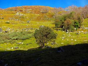 Why one should consider trekking to Hampta Pass in post monsoon season