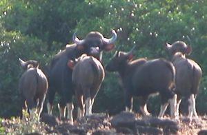 Wild Encounters: Prachitgadh