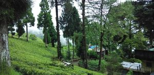 Solo Travel: Queen of hills, Darjeeling