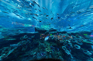 Dubai Aquarium & Underwater Zoo 1/1 by Tripoto