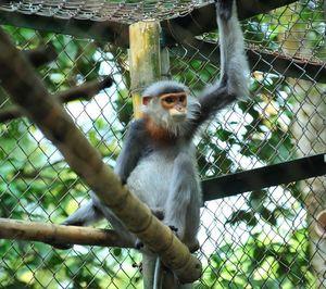 Vietnam Eco-Adventure Holidays