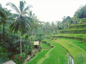 Eat,See,Experience and fall in love with Ubud