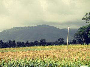 In the lap of Mother Nature – Wayanad
