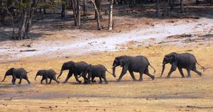 Wild Encounters in Zimbabwe - Hwange National Park