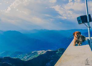 Chail, Himachal Pradesh: A Perfect Weekend Getaway