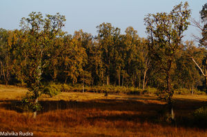 Kanha Calling - A Guide to Kanha National Park