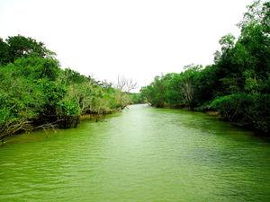 Seven stunning Wildlife destinations in Odisha.