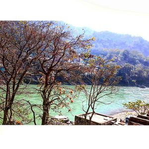 Best of the mighty river; Ganges