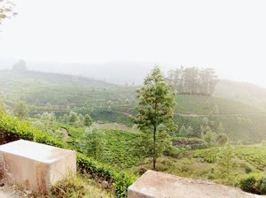 The Unusual Munnar- Its not only about Tea Plantations