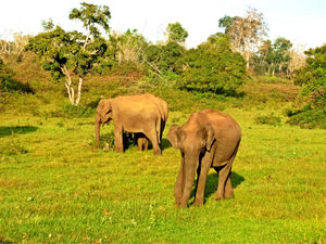 Weekend Bliss- Bandipur and Wayanad