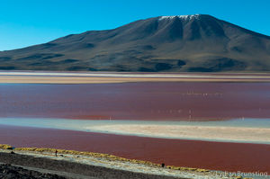 Small Wonders Of The Bolivian Highlands