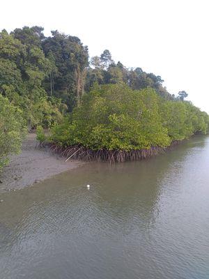 Meandering through the Mangrove creeks at Baratang Island – A boat ride from Nilambur Jetty.