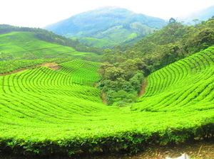 Kerala - A detailed itinerary and some experiences of lifetime!