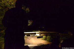 Satpura: A Night Safari In The Jungle