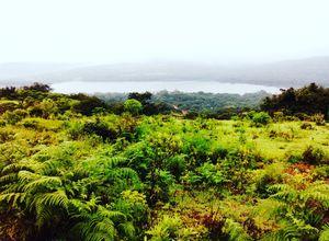 Kaas Plateau - Maharashtra's Valley Of Flowers