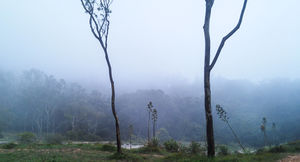 Road Trip to Nandi Hills..