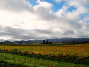 Miner Family Winery 1/1 by Tripoto