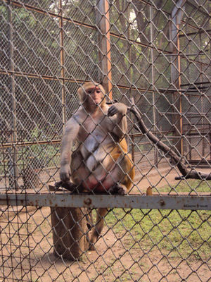 Byculla Zoo 1/1 by Tripoto
