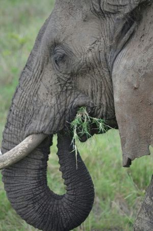 Wildlife Safari: Tanzania