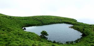 The Southern Deccan - Wayanad