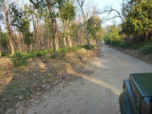 Corbett National Park: My Tryst With The Tiger