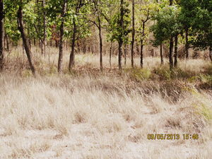 Oh Tiger! Could thou be more elusive? @Bandhavgarh