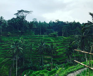 6 unique and weird things about Bali, you probably didn't know!